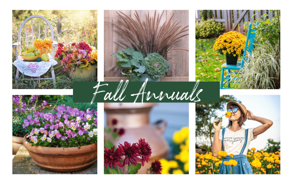 Collage image of Fall Plants - Annuals