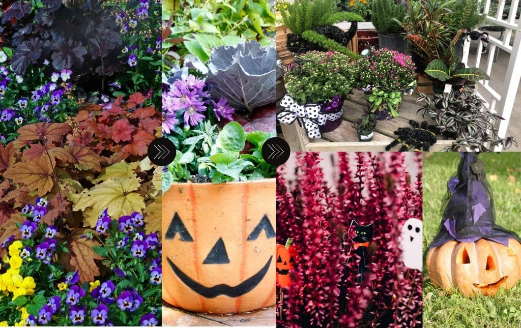 Fall decor image, how to transition jewel tones into halloween