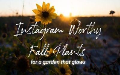 Instagram Worthy Fall Plants for A Garden That Glows
