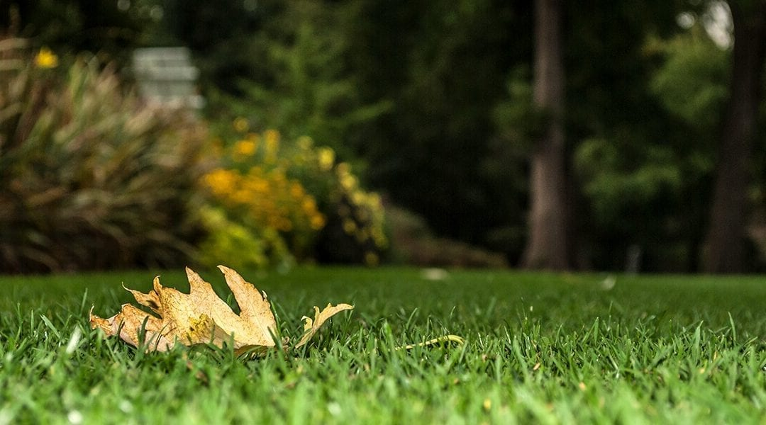Fall Lawn Care Checklist