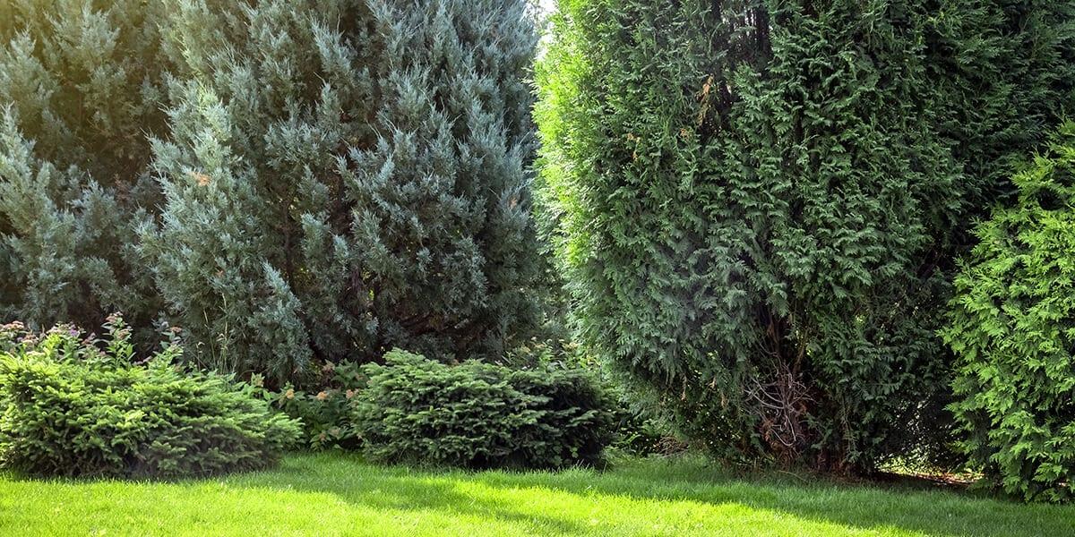platt-hill-plant-more-evergreens-wildlife-shelter