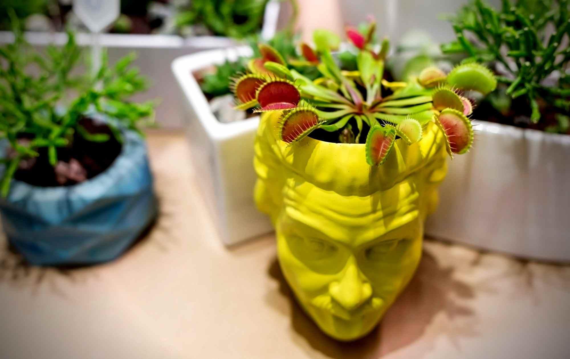 Venus Fly Trap Plant Image