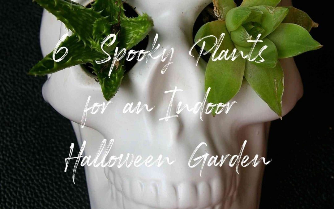 6 Spooky Plants for an Indoor Halloween Garden