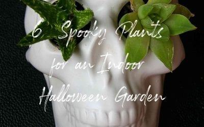 6 Spooky Plants for an Indoor Halloween Garden