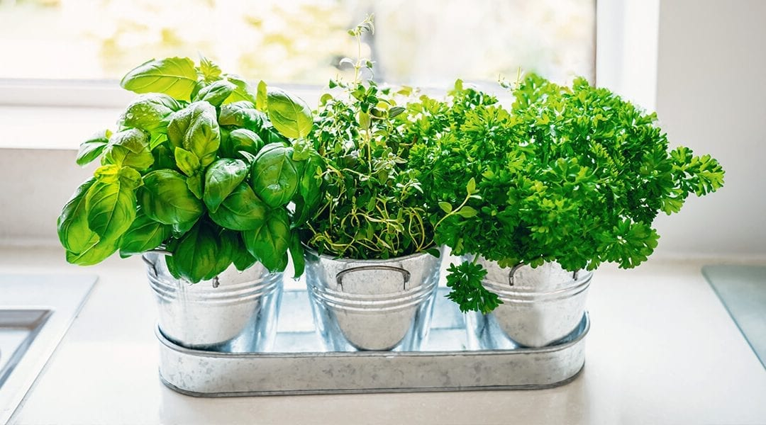 Herbs You Can Grow Inside All Year