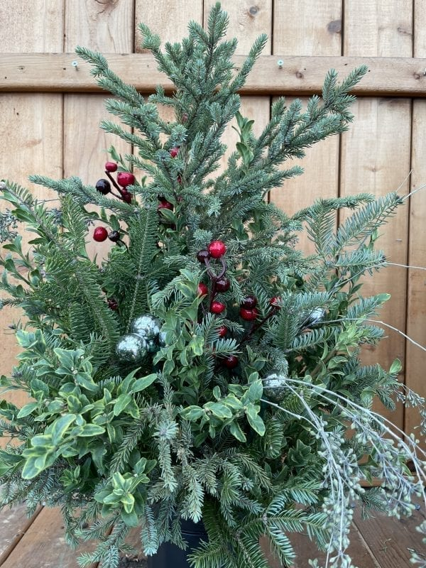 Holiday planter with fresh mixed greens