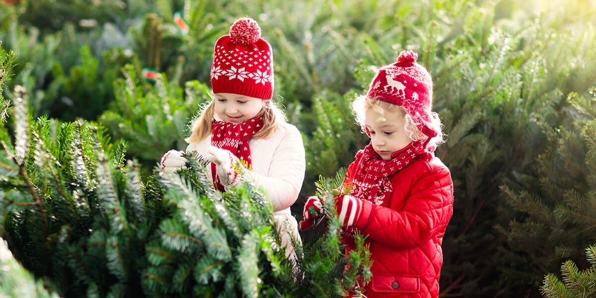 platt-hill-artificial-vs-fresh-christmas-trees-kids-choosing