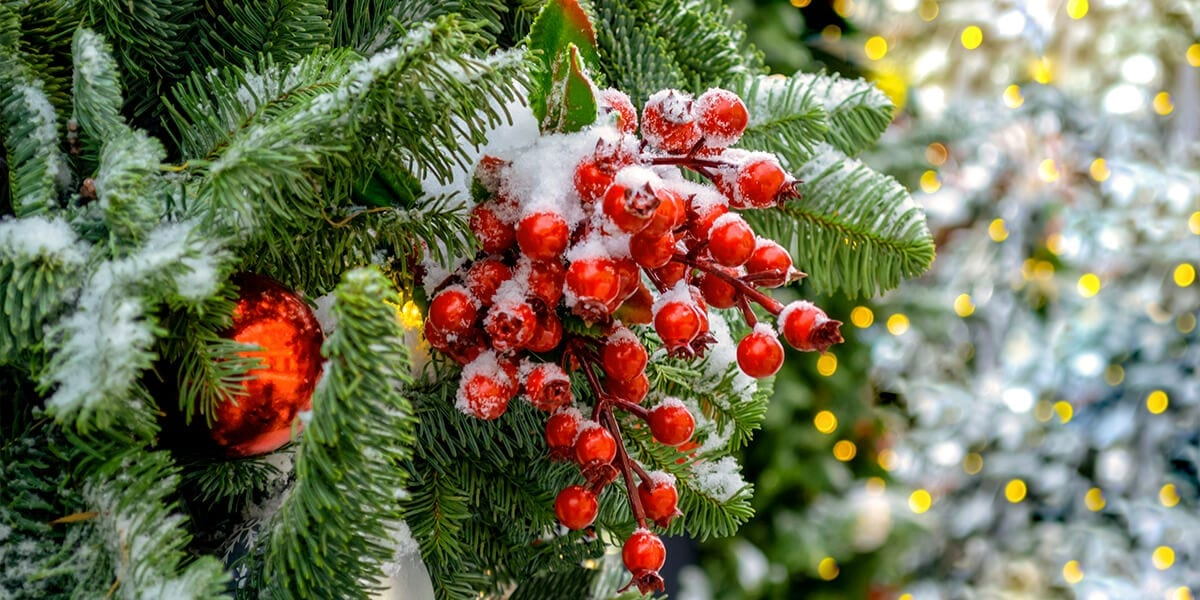 platt-hill-fresh-christmas-tree-with-berries