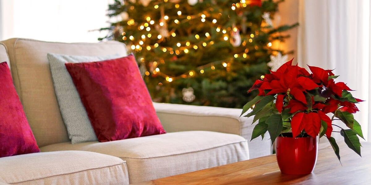 platt-hill-holiday-decor-hotspots-christmas-living-room-poinsettia