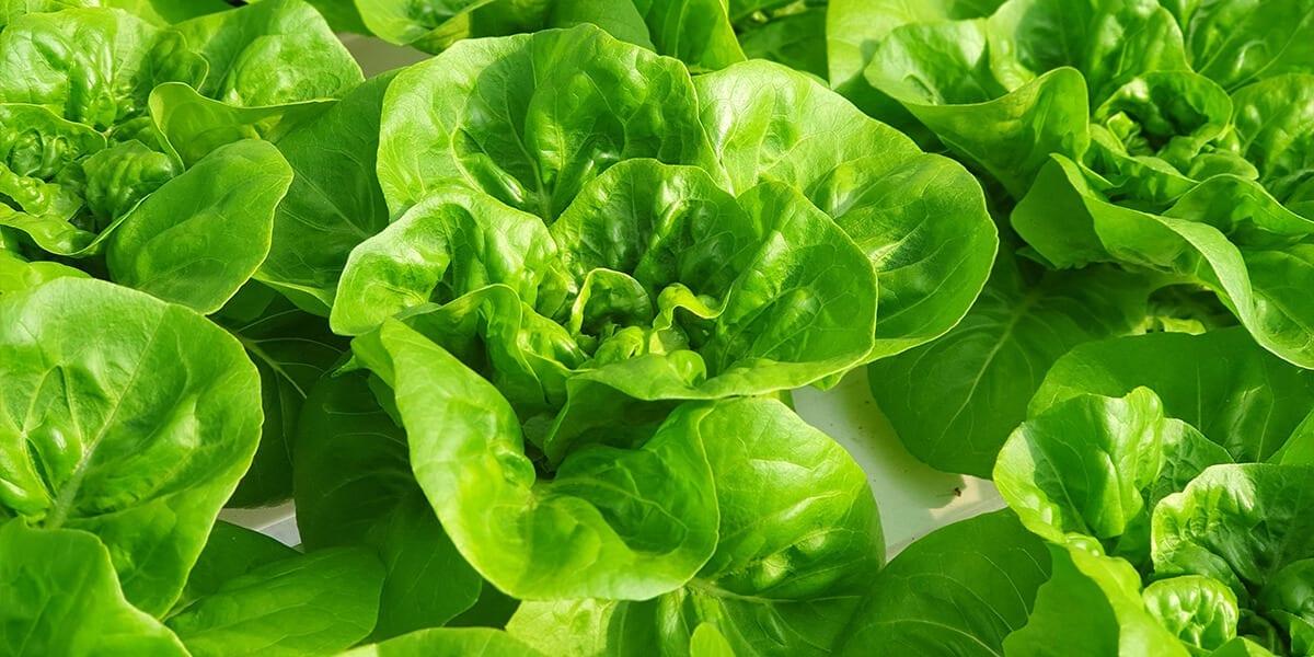 platt-hill-holiday-gift-guide-2020-lettuce-up-close