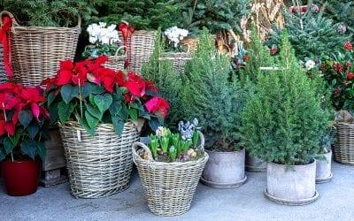 The 2020 Platt Hill Holiday Gift Guide