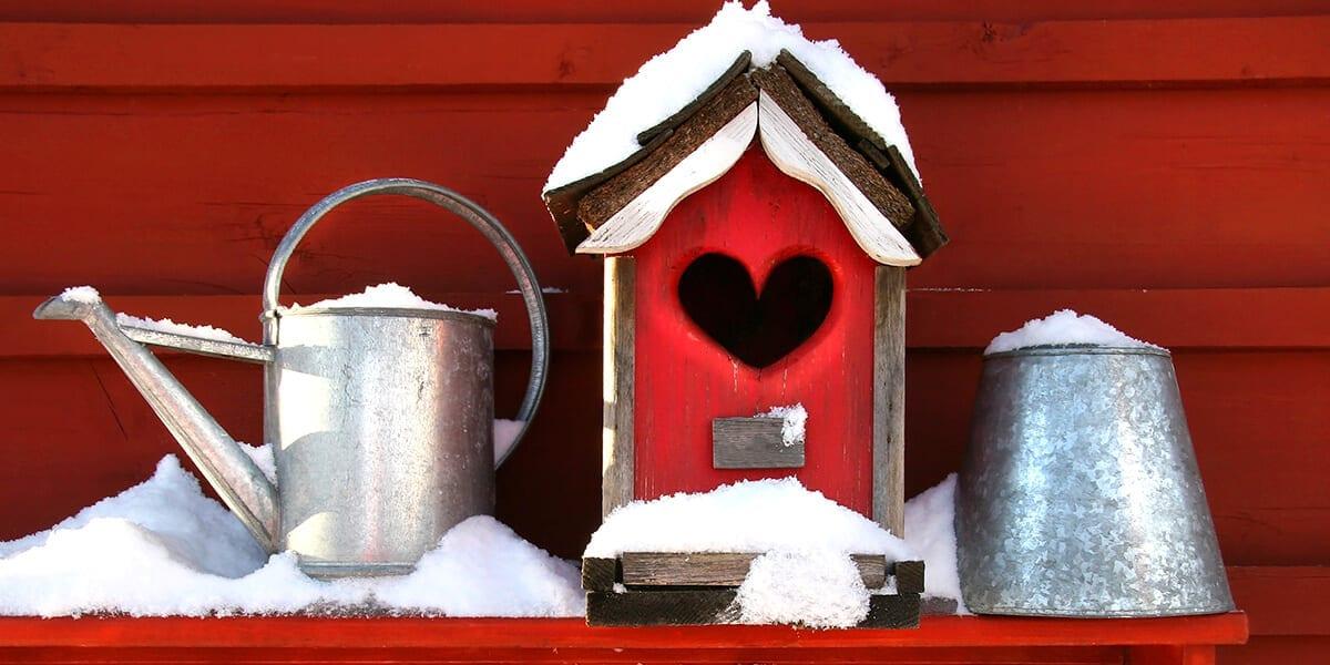 platt-hill-holiday-gift-guide-2020-red-winter-houseplant