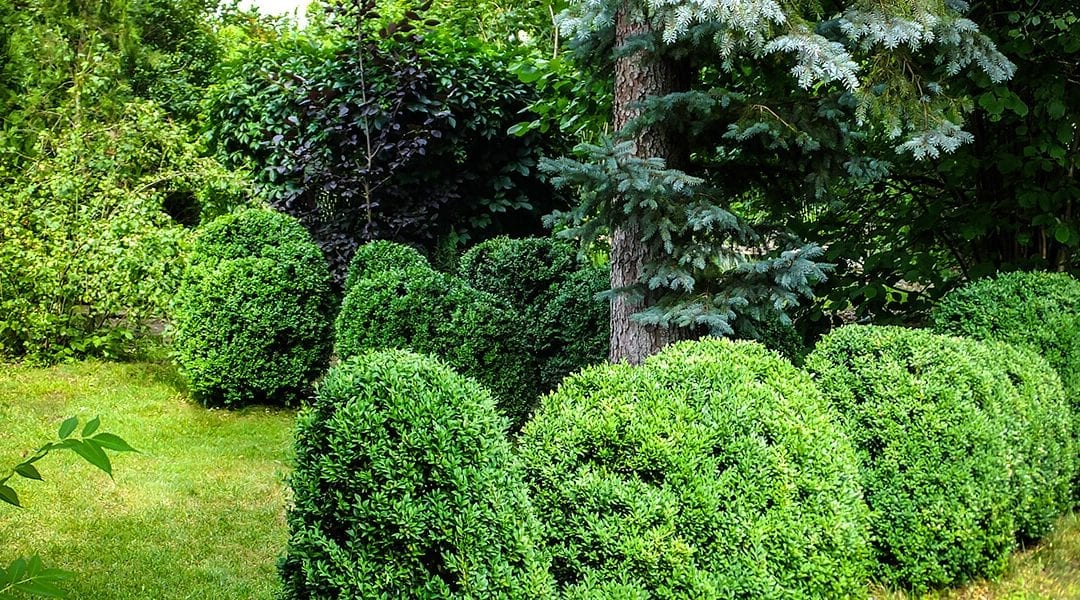 platt-hill-nursery-fall-to-winter-backyard-landscape-evergreens