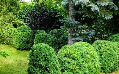 Transitioning the Home & Landscape from Fall to Winter