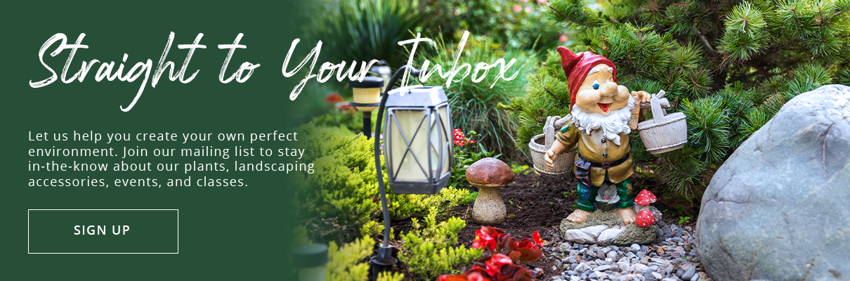 platt-hill-nursery-fall-to-winter-evergreen-garden-gnome-subscribe-button