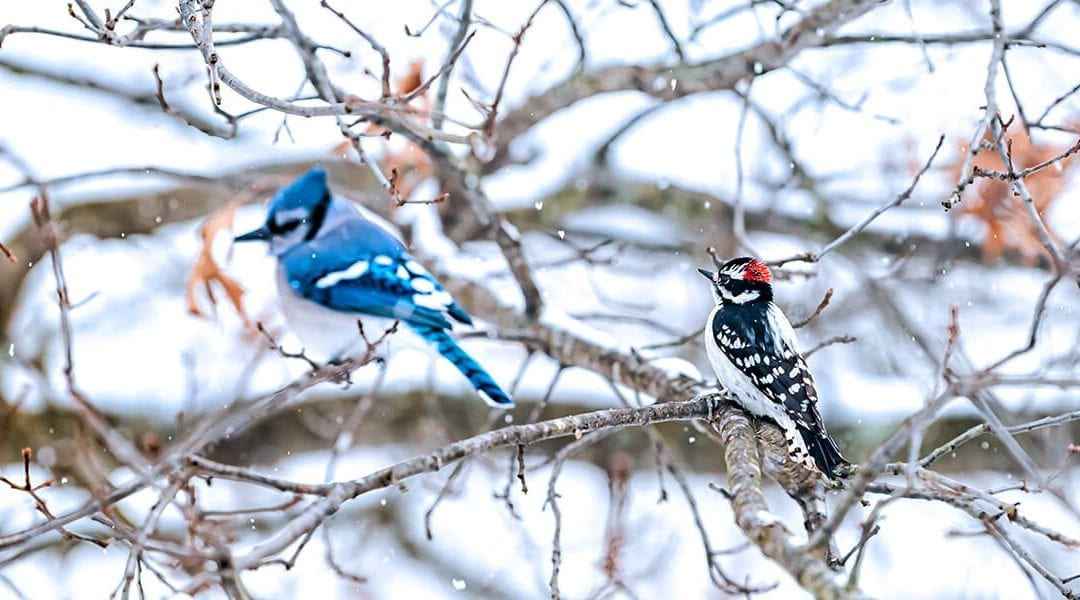 How to Be a Friend to the Birds This Winter