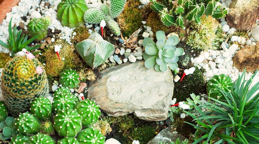 Create Your Own Miniature Garden Indoors