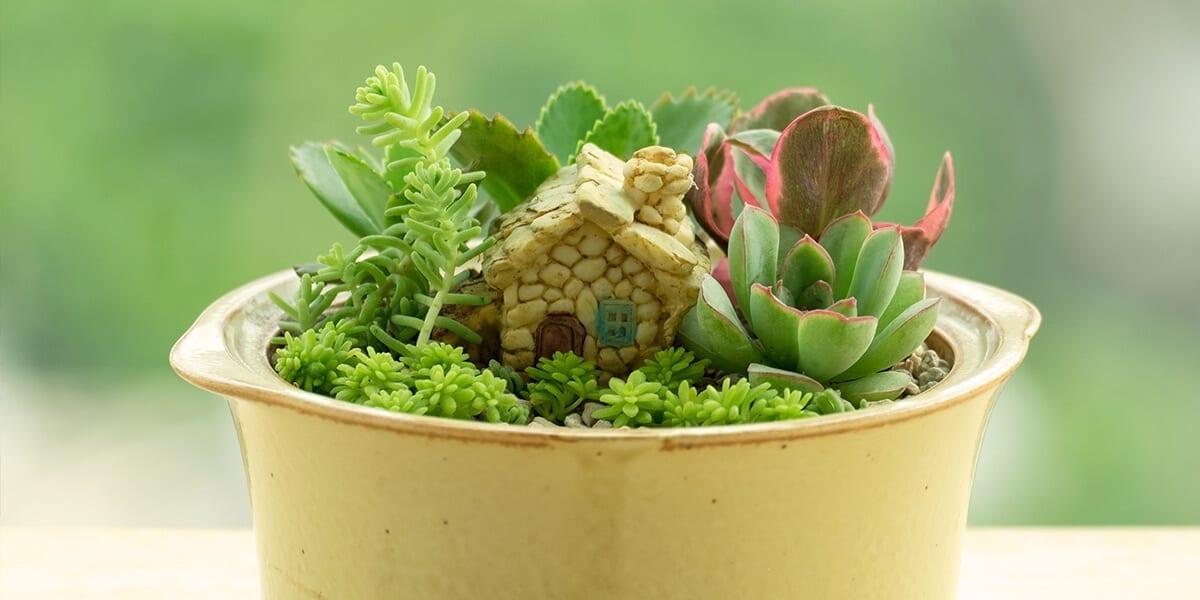 platt-hill-DIY-mini-garden-succulents-tiny-home