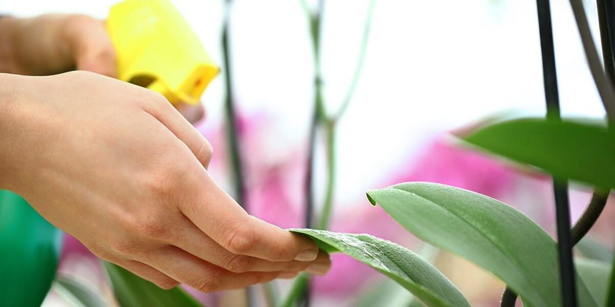 platt-hill-indoor-plant-pests-spraying-houseplant-leaf