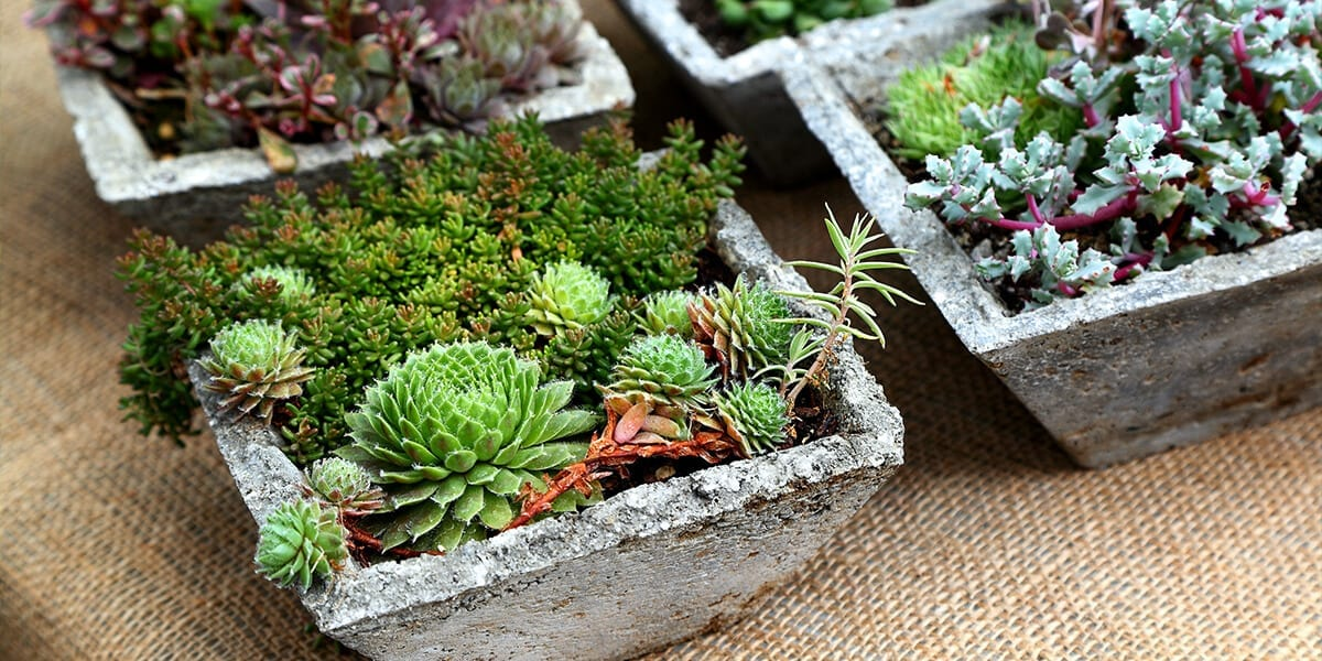 platt-hill-last-minute-gifts-miniature-garden-succulents