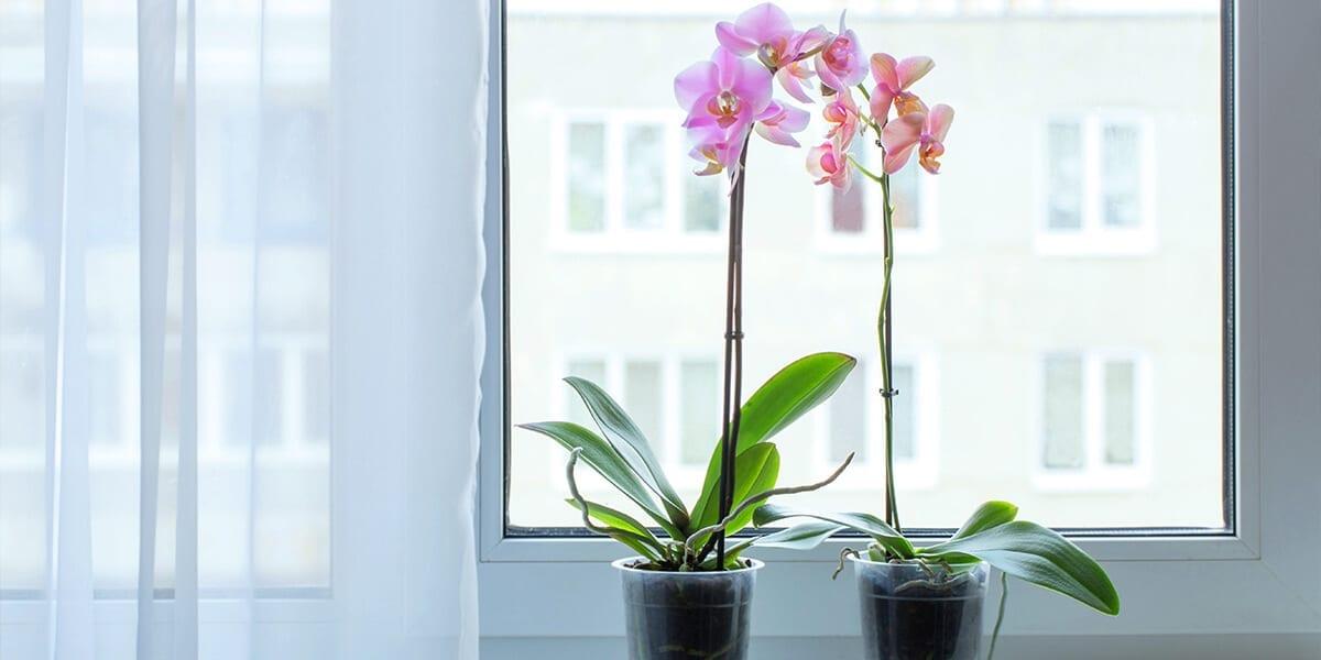 platt-hill-last-minute-gifts-orchids-on-windowsill