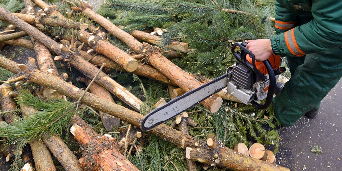 platt-hill-recycle-reuse-christmas-tree-chainsaw-fire-wood