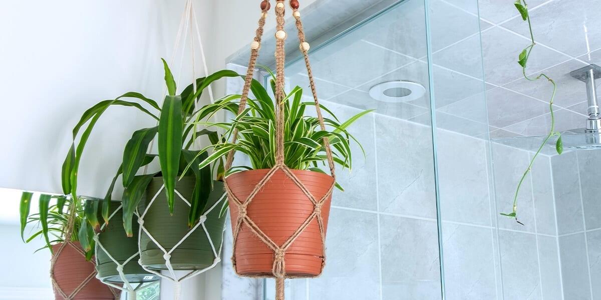 platt-hill-pet-safe-houseplants-spider-plant-basket-in-bathroom