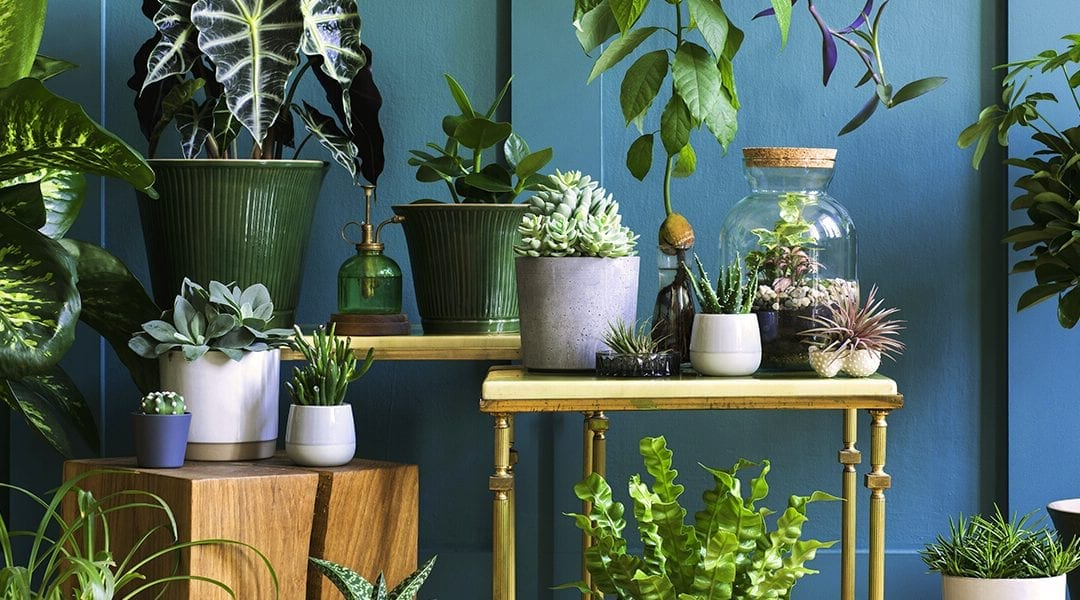 Create an Urban Jungle with These Light-Loving Houseplants