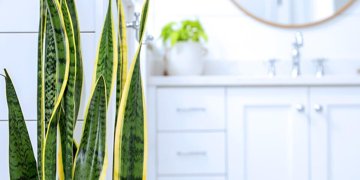 platt hill nursery plants for low light snake plant bathroom