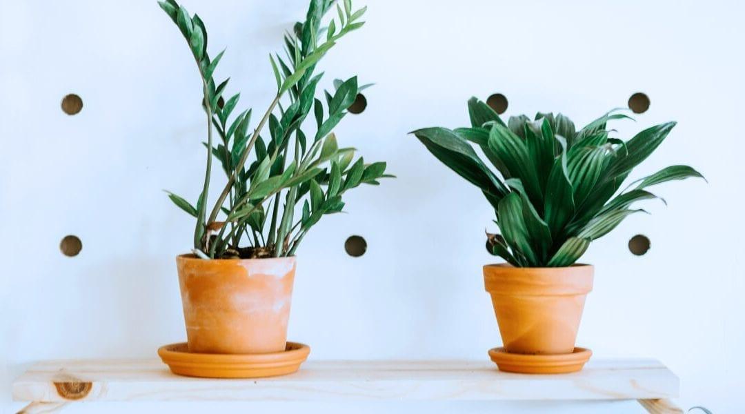 Plants that Brighten Low-Light Spaces