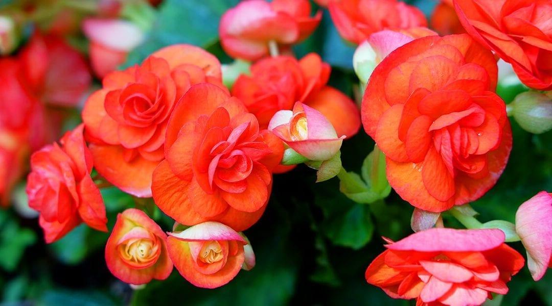 Romantic Houseplants for Valentine's Day