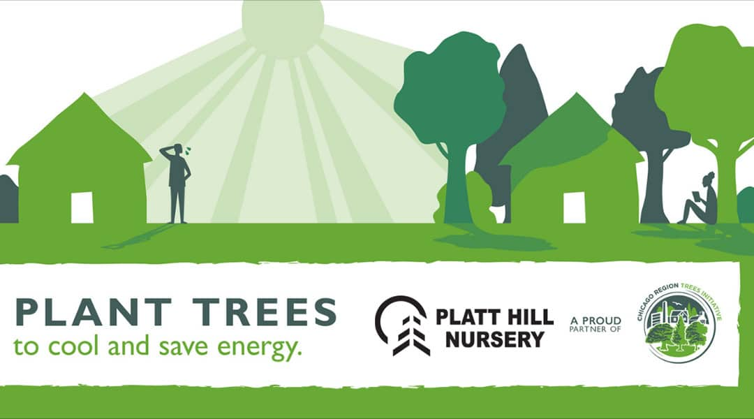 Plat trees to cool your home and save energy