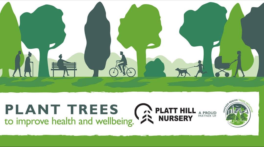 Plant Trees to Improve Health and Wellbeing | Platt Hill Nursery