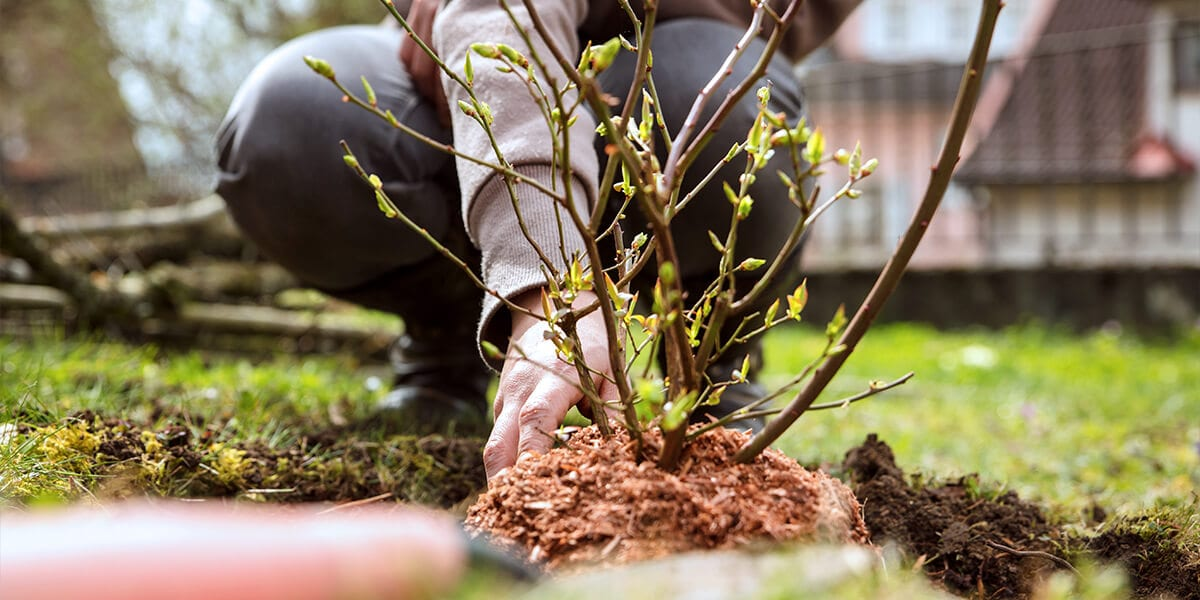 platt hill 2021 garden landscape planting trees shrubs