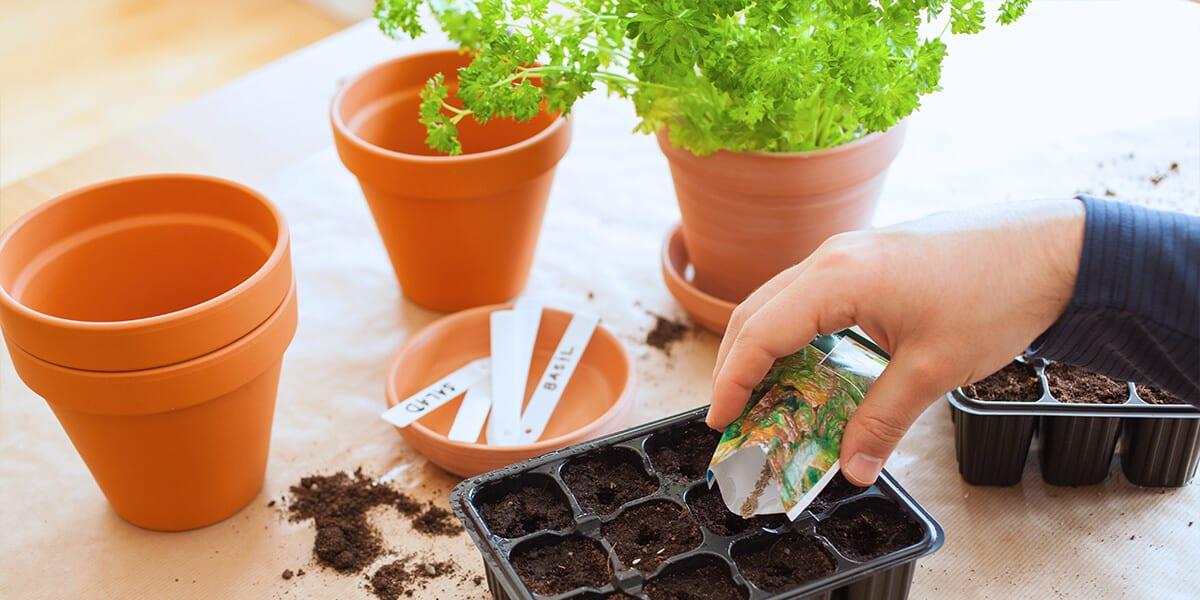 platt hill 2021 garden landscape seed starting tray indoors