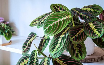 Tropical Houseplants that You Can Move Outdoors in the Summer