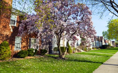 How to Remedy Common Problems in Your Yard