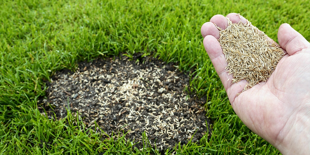 platt hill nursery fixes to common yard issues handful grass seed