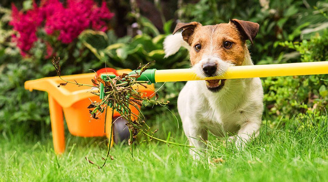 April Gardening & Landscape Calendar in Zone 5