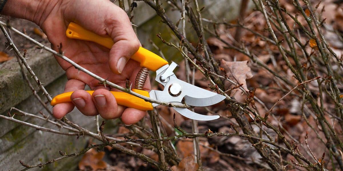platt hill nursery zone 5 landscaping maintenance checklist pruning branches