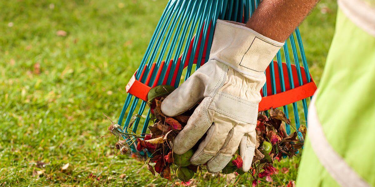 platt hill nursery zone 5 landscaping maintenance checklist rake leaves