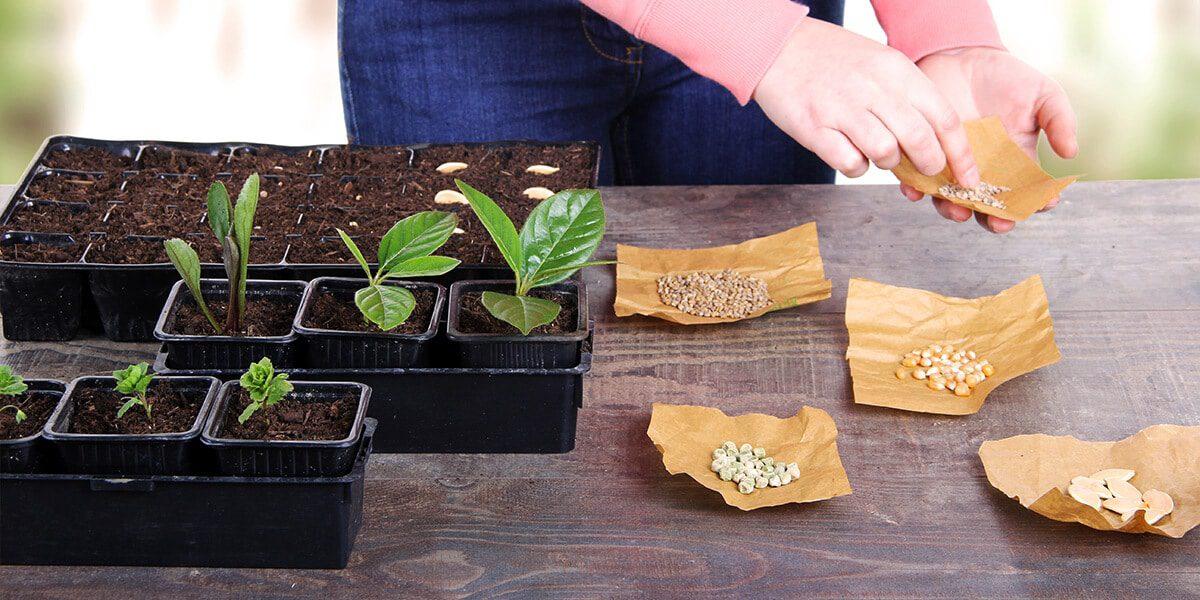 platt hill nursery zone 5 landscaping maintenance checklist seed starting