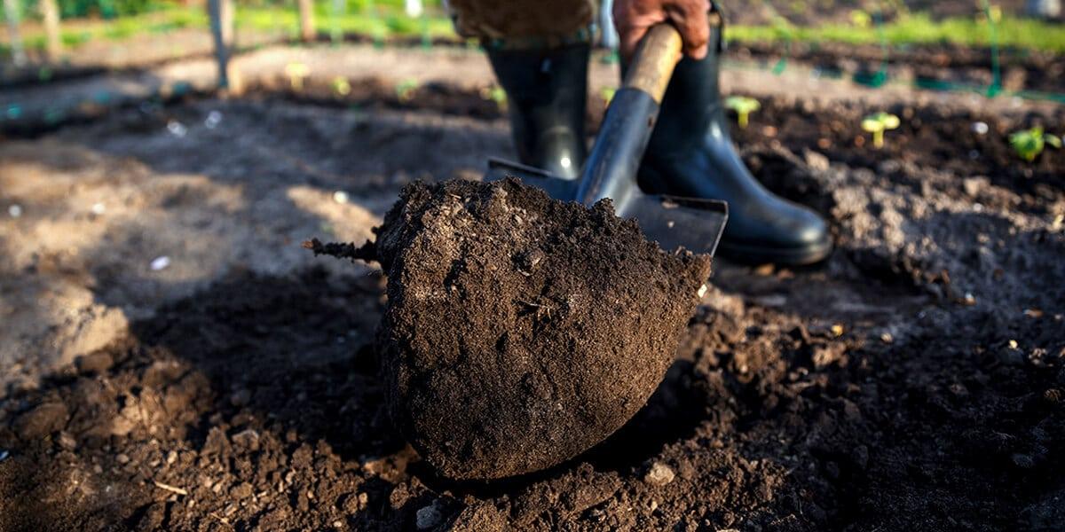 platt hill nursery zone 5 landscaping maintenance checklist tilling soil