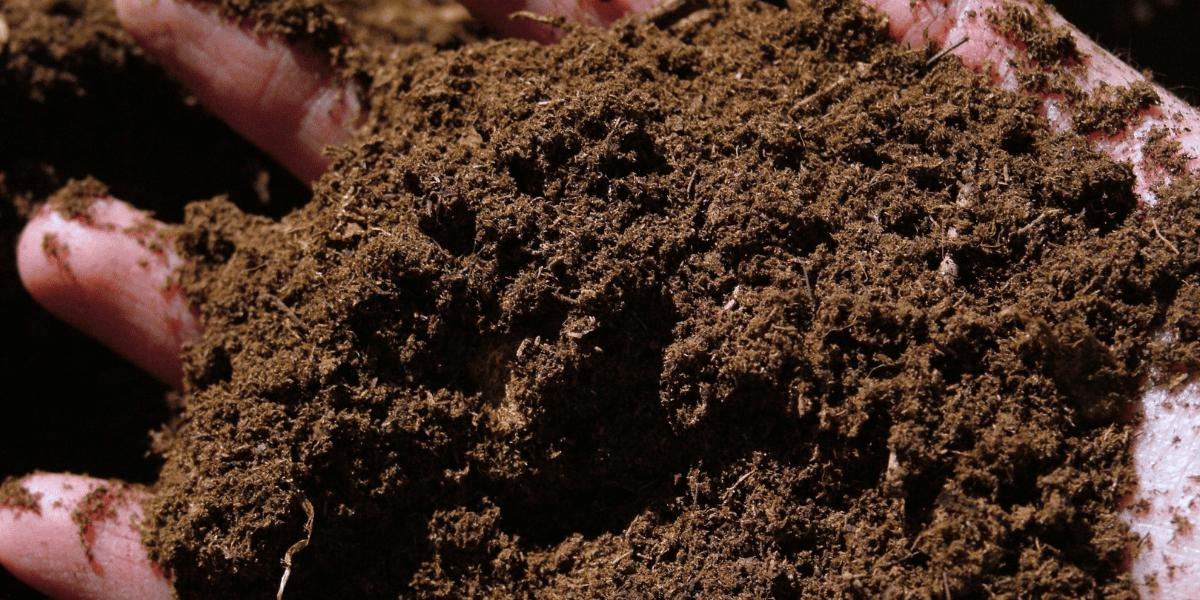 close up shot of a gardener holding soil Platt Hill Nursery