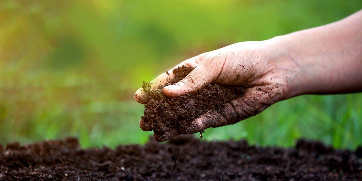 platt hill beginners guide garden soil hand holding soil