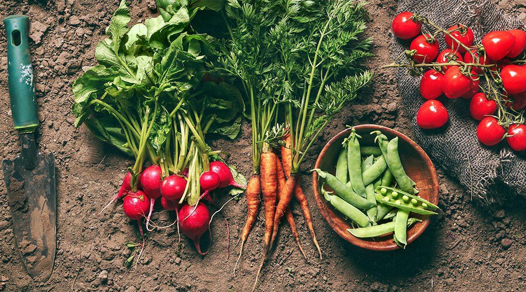 The Top Ten Garden Vegetables and Fruits for Beginners
