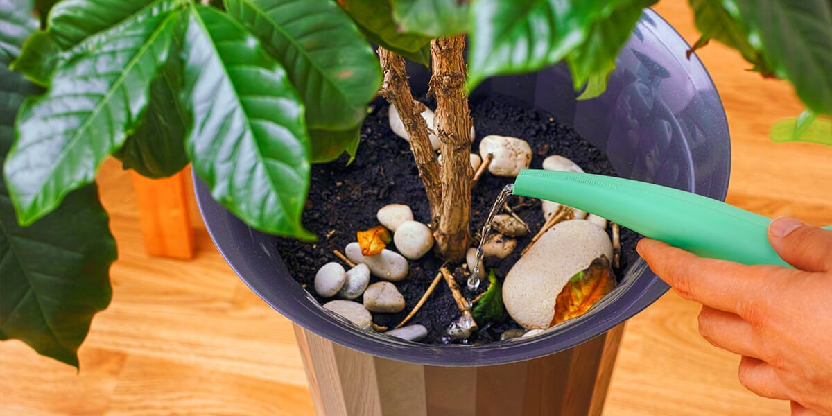platt hill nursery basics of watering potted houseplant