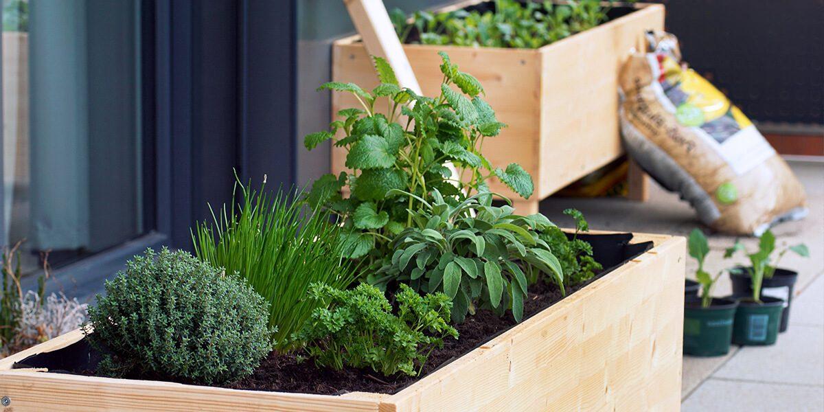 platt hill nursery gardening hacks for beginners raised herb bed