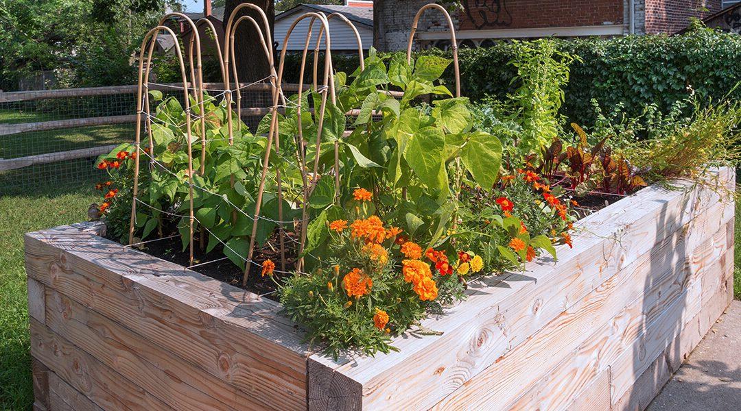 platt hill nursery gardening hacks for beginners raised vegetable garden