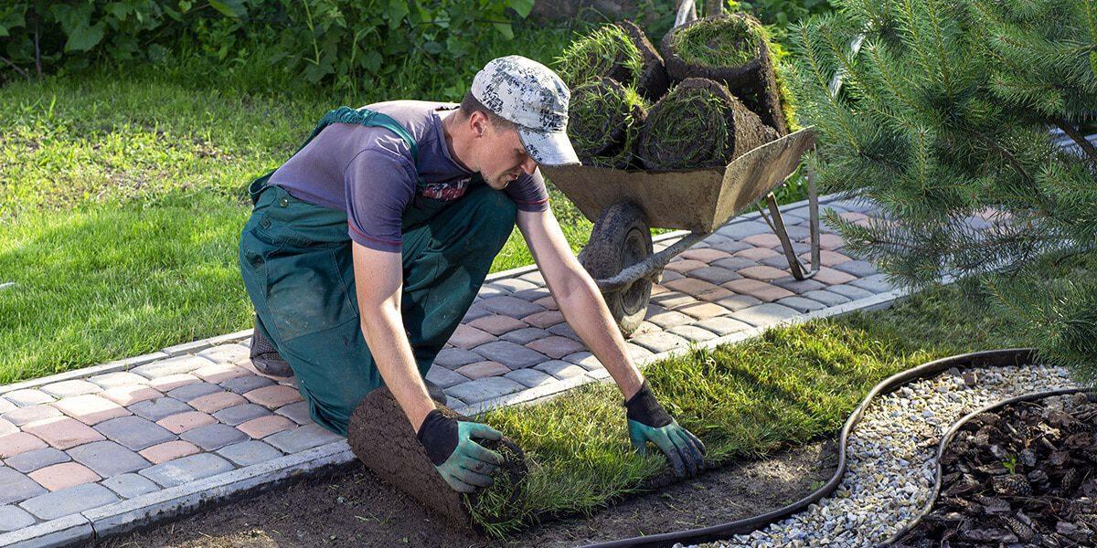 platt hill nursery transform landscape in stages laying sod